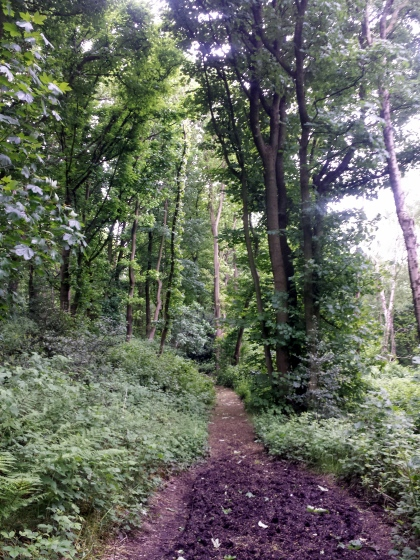 Shaw Wood trail