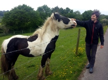 Horse tickles